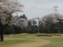 見事な桜の中でのプレー