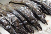 太刀魚 この魚のグリルと焼きバナナを一緒に食べるのがマデイラ風